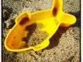 På den öde sandstranden en fisk övergiven nu väntande på en ny lekkamrat