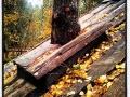 På skattjakt i höstguldsfärgad skog
