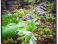 Fuktigt i skogen på kvällskvisten