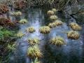 Hade som tanke att hitta bilder på vatten och buskar men det blev grästuvor i det frusna vattnet med de risiga buskarna som bakgrund. Sent på kvällen så ljuset blev lite blått men känner att det skapar en viss dynamik med det mörka svarta frusna vattnet och de ljusa tuvorna