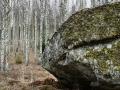 Har arbetat med kontrasterna mellan den stora mörka stenen och den ljusa björskogen som finns i bakgrunden som skall vara oskarp för att öka djupet