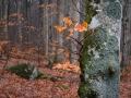 Vårmorgon i bokskogen