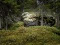 Sten i skog