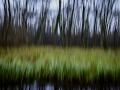 ICM (Intentional Camera Movement) på några träd