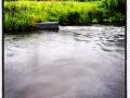 Morgonregnet gav flöde i Kvillebäcken
