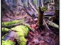 Slingans träskhål en höstig vårdag i mars