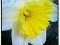 Efter en dammig dag under båten och luftande av hydraulsystem nu sittande om inte under korkek iallafall luktande på blommor
