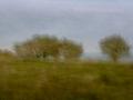 Träd vid Ale stenar