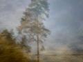 Ett ensamt träd vid Roslagskusten