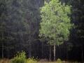 Regn och grönska