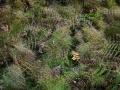 I skogen finns det små detaljer