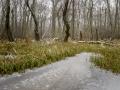 """Försökte fånga den dimmiga krispiga morgon och dess kyla. Att känna dimman i bakgrunden bland träden. Samtidigt som isen skulle vara en bas som pekar in med sin tunga mot bildens mitt och det fallna trädet som ligger som en marlkering under """"horisonten"""" där gräset övergårtill träd."""