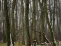 Samma dimma som i bild ett. Detta med träd är svårt försker och försöker har försökt få separation och djup mellan träden samtidigt som den svga riktningen av ljuset från vänster skall ge lite form åt stammarna. Tyckte det var svårt med vitbalansen i denna bild