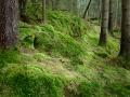 En disig dag i skogen och plötsligt bara föll det lite mera ljus genom diset på denna lilla sluttning . Kunde inte motstå det. Samtidigt som jag känner att jag skulle vilja ha ngt i mitten som leder blicken vidare så känner jag samtidigt att det blir ett lugn med den stora tomma böljande gröna yttan i mitten