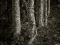 Ängskärs skog