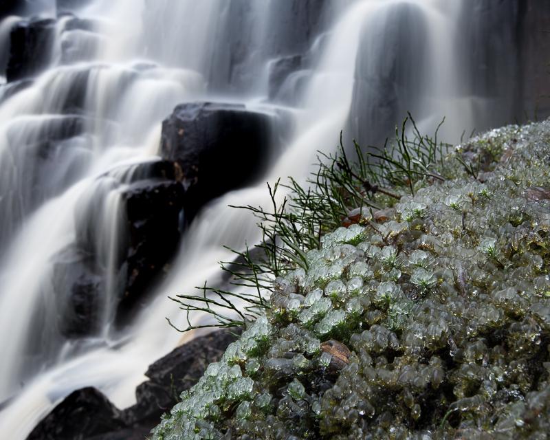 Fruset vatten på mossa