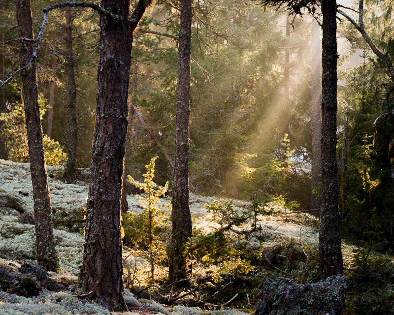 Solen kommer upp och börjar värma upp i den kyliga morgonen